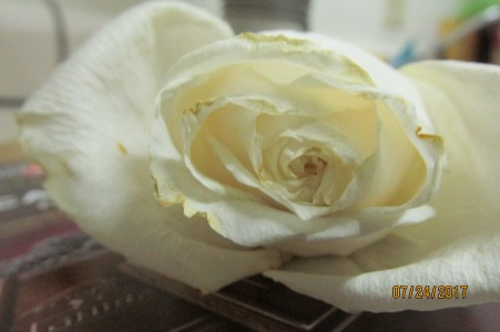 The last rose of the bouquet from the Food Pantry in July 2016